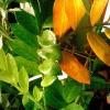 Правда, что ананас можно посадить? И чего вырастет?