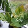 Какие растения можно посадить, если в комнате сухой, теплый микроклимат, кроме