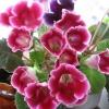 Антуриум. Чем уникально это растение? Самые красивые и популярные виды?