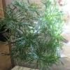 У меня пальма пахира акватика и у не (на стволе и из земли) начали расти грибы. Что это?