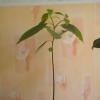 Посадил листок фикуса - корни он дал - что дальше делать?