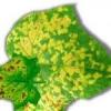 Что делать, если желтеют листья огурцов