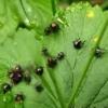 Вредители сада – осенняя обработка