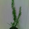 Как называетьься эти растения?