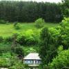 Дикие деревья и кустарники на садовом участке, условия произрастания