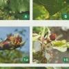 Долгоносики - вредители сада и огорода, меры борьбы и профилактики