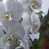 Где ростут герберы ? Каких цветов они бывают ? Картинки приветствуются ! Заранее спасибо !