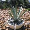Недавно посадила циперус, растет быстро , но почва в горшке начала плесневеть, подскажите, что делать