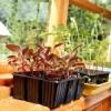 Главные правила посева семян в открытом грунте