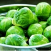 Готовим будущий урожай: брюссельская капуста - выращивание и уход