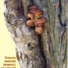 Грибы-вредители и лишайники на деревьях, профилактика и борьба с ними