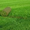 Как часто вносить удобрения для газонной травы