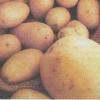 Как дольше сохранить картофель, оптимальные условия для хранения