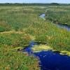 Как осушить болотистый участок