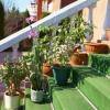 Как полить цветы на даче и дома в отсутствие хозяев