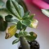 Как повысить влажность воздуха в квартире? Сохнут растения.