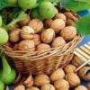 Как правильно посадить грецкий орех