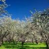 Как уберечь сад от вредителей?