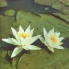 Как украсить водоём на садовом участке декоративными растениями и цветами