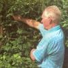 Как увеличить урожай черной смородины, опыт садовода чечёткина