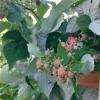 Как вы храните малину зимой, чтобы максимально сохранить все ее полезные свойства?