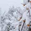 Как защитить деревья от морозов в осенне-зимний период