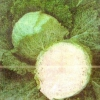 Капуста савойская, её питательные, диетические и лечебные свойства
