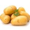 Картофель винета: вкусный, неприхотливый, устойчивый к болезням
