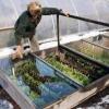 Каждый садовод на участке может построить зимний парник своими руками