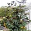 Клещевина - однолетний гигант в саду