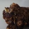 Сколько лет растёт цикас диаметром 30см? Стоит ли такой покупать?