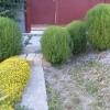 Кохия-элемент садового дизайна