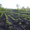 «Кристалон» – универсальное растворимое комплексное удобрение, подходящее для выращивания различных культур