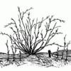 Крыжовник: как правильно высаживать, ухаживать и лечить