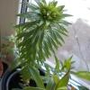 Луковицы лилий тоже посадить в ёмкости или нет? Как считаете?