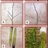 Многосортовое дерево, создание многосортового дерева
