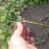 Мой опыт спасения рассады томатов