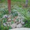 Мой сад в ожидании зимы