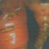 Морковная муха, способы профилактики и борьбы