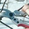 Можно ли делать обрезку плодовых деревьев и кустарников зимой?