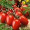 Низкорослые томаты: посадка семенами
