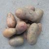 Нужно ли зеленить посадочный картофель перед закладкой на хранение?