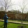 Опрыскивание плодовых деревьев весной. Как добиться богатого урожая?