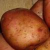 Отличный вкус и высокая урожайность — картофель «ильинский»: описание сорта, характеристика, фото