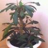 Растение юкка. Как за ним ухаживать?