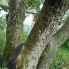 Почему зеленеют стволы деревьев?