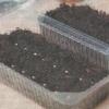 Почвенные смеси для выращивания рассады, их состав и качество
