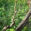Подрезка кустов винограда: зачем она нужна и как ее правильно делать?