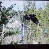 Птица на моем дачном заборе