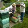 Расширение гнезда пчел